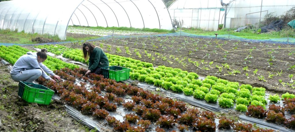Formations Horticulture Maraîchage